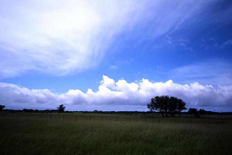 黒島の牧場