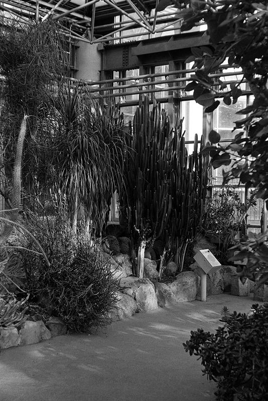 温室の植物たち