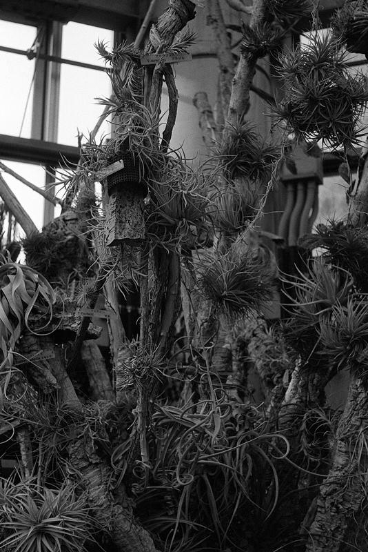不思議な形の植物たち