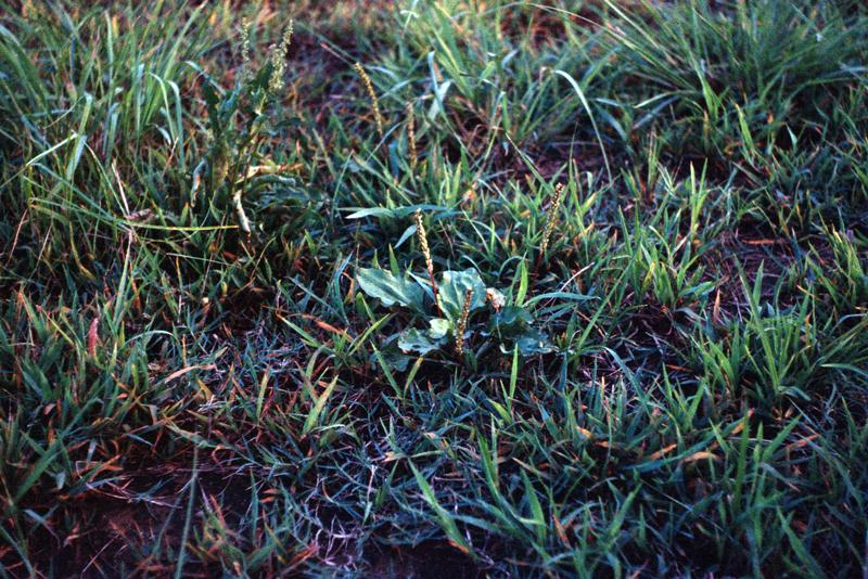 日暮れ前の草たち
